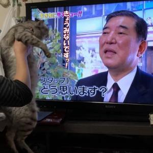 猫に人気な石破さん。