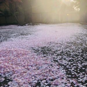 花びらのピンク