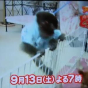 志村けんさんご冥福をお祈りします。岡山県プードル専門ブリーダー子犬販売SWEET DOG