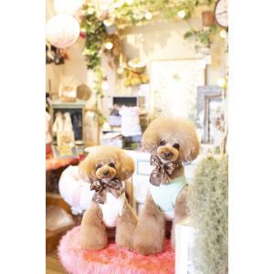 エヴァちゃん Jくん 可愛い兄妹 SWEET DOG 岡山県プードル専門ブリーダー子犬販売