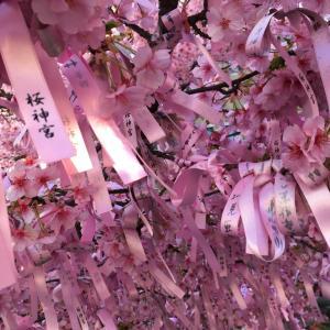 固定と安定は違う / 桜神宮の河津桜と表参道のフレンチバー♡