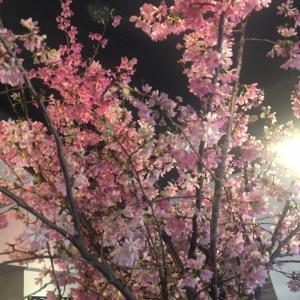 春のあれこれ♡