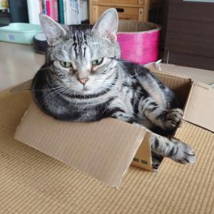 お気に入りの箱 にゃんこ部更新です♪