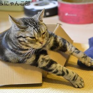 続・お気に入りの箱