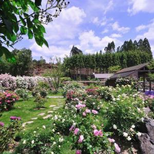 【Stay Home】ネットでオープンガーデン、京北バラ園(六ヶ畔・花簾庭)2019