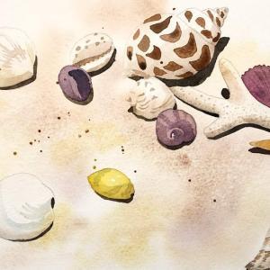 貝殻を描く