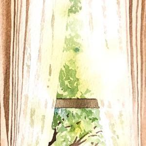 起雲閣 レースのカーテン越しの光