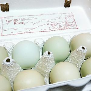 コレステロール値が気になる方は卵はNG?
