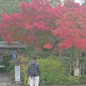 """京都の""""紅葉狩り""""「そうだ。京都行こう」1日目 その1♪"""