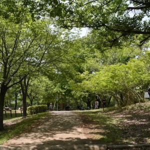 姫路市自然観察の森へ!