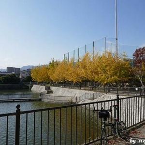 街の秋を探してポタ … 西宮界隈