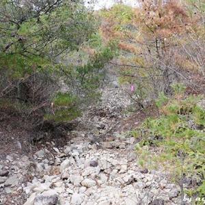 行者山~子うさぎ岩~樫ヶ峰ハイク … 樫ヶ峰