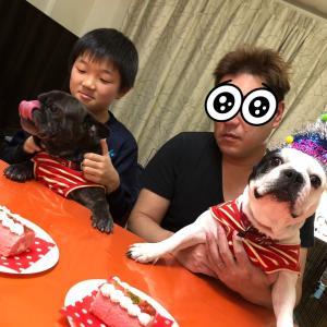 フレンチブルドッグ お誕生日おめでとう(^_-)-☆