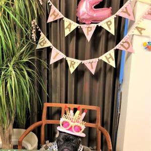 フレンチブルドッグ 2歳のお誕生日🎆
