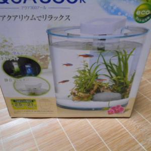 熱帯魚のお引越し~