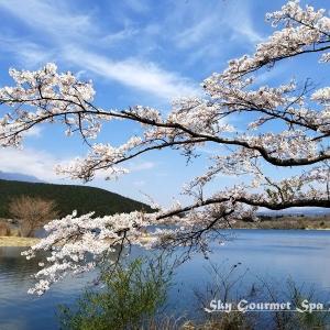 ◆ 日本五大桜の狩宿下馬桜、その1「田貫湖」へ(2020年3月)