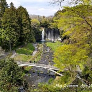 ◆ 日本五大桜の狩宿下馬桜、その2「白糸の滝」へ(2020年3月)