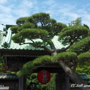 ◆ 4年前の故郷鎌倉、その1「あじさい咲く長谷寺」へ(2016年6月)