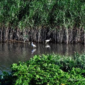 ◆ 「ベランダから多摩川」を見た日(2021年7月)
