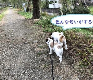 昼休み散歩、始めました。