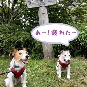 茶臼山高原ハイキング ~ちょっとハードだったな~