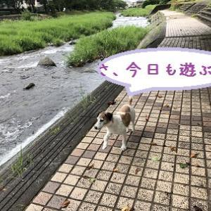 よく泳いだ夏 ~で、犬達ガリガリ・・汗~