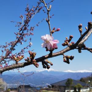 「里の春~美しき彩」