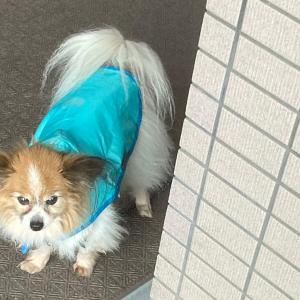 雨の散歩も悪くない?