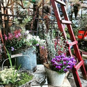 最近のお庭、、、、