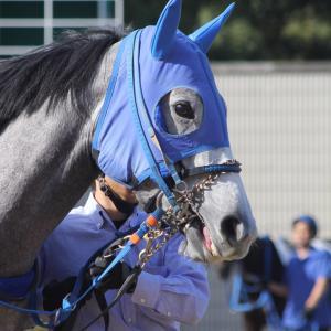 愛馬の写真;レッドシルヴァーナ(2019年11月11日京都)
