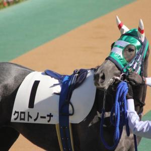 愛馬の写真;クロトノーナ(2019年11月16日東京)