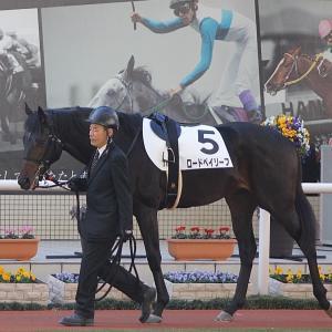 愛馬の写真;ロードベイリーフ(2019年12月8日阪神)