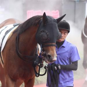 愛馬の写真;レッドシャーロット(2019年7月21日中京)