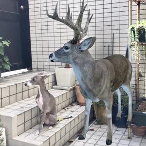 庭に鹿を呼んでみた