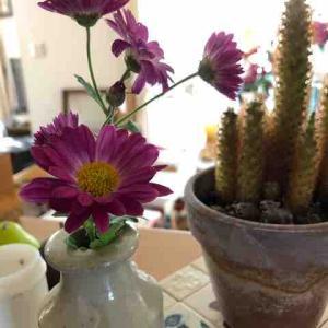 菊とキンシコウ