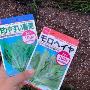 《【ダイソー】タネ2袋で100円!畑エンジョイ生活「モロヘイヤ」「作りやすい春菊」》