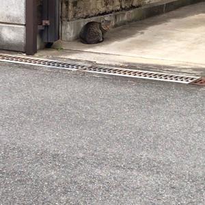 『chinaの日本ネコ歩きmini』昼