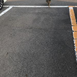 『chinaの日本ネコ歩きmini』夕方
