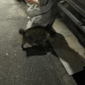 『chinaの日本ネコ歩きmini』夜