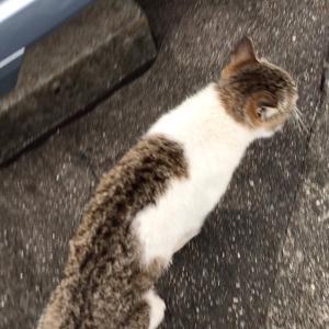 『chinaの日本ネコ歩きmini』夕方☔️