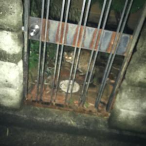 『chinaの日本ネコ歩きmini』夜⑤