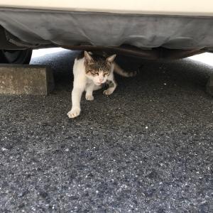 『chinaの日本ネコ歩きmini』お昼