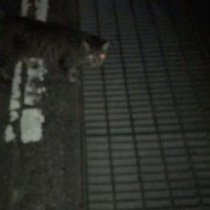 『chinaの日本ネコ歩きmini』夜④
