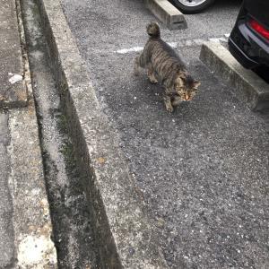 『chinaの日本ネコ歩きmini』夕方②