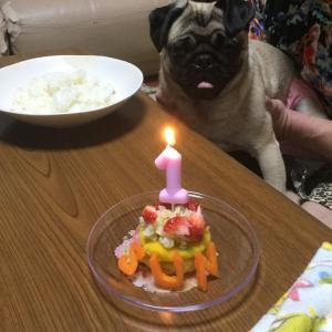 1歳のお誕生日(*^ω^*)