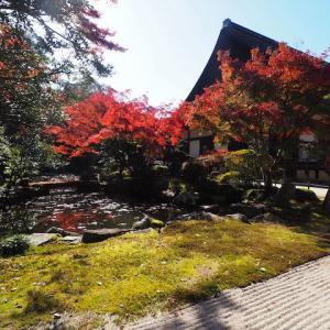 知恩院ぐるり 方丈庭園の紅葉