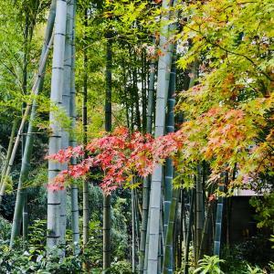 一条恵観山荘の紅葉 2020