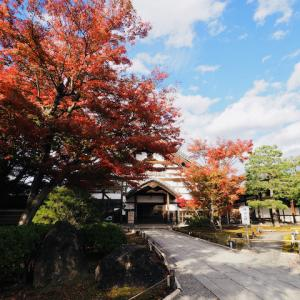 高台寺の紅葉 2020