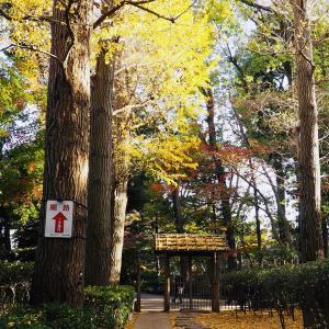 大田黒公園の紅葉 2020