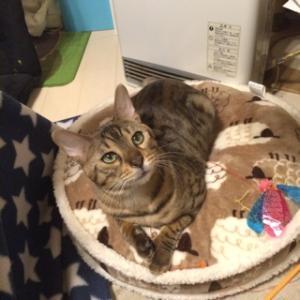 猫ベッド・・・これももどき。